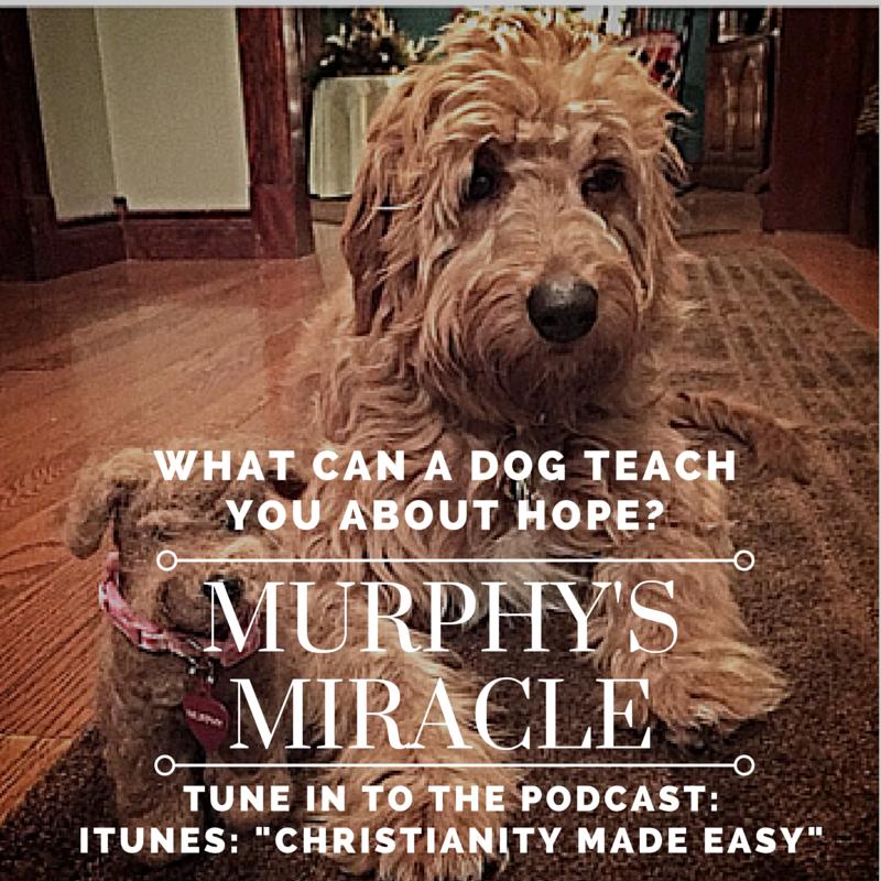 Murphys Miracle-2